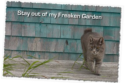cat repellent recipes