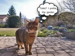 How To Stop Cats Ing In Your Garden Away
