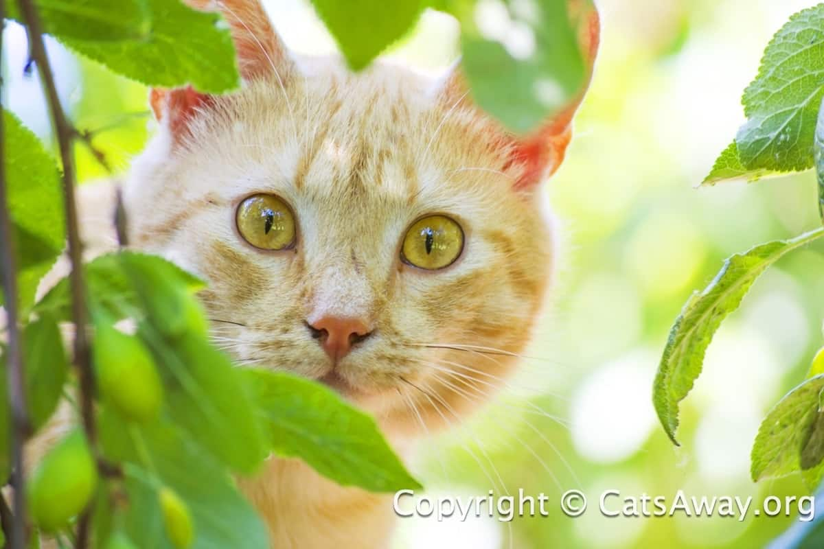 Cat Law - Laws About Problem Cats and Their Owners
